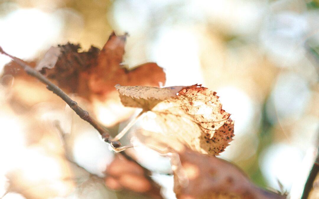 Efterårets sæson